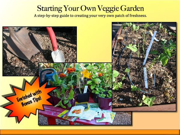 Starting Your Own Veggie Garden