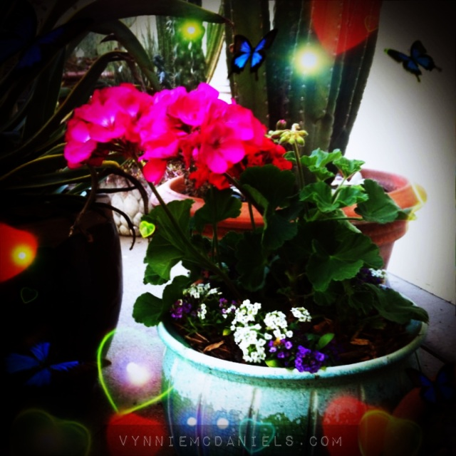 Magical geraniums summoning spring!