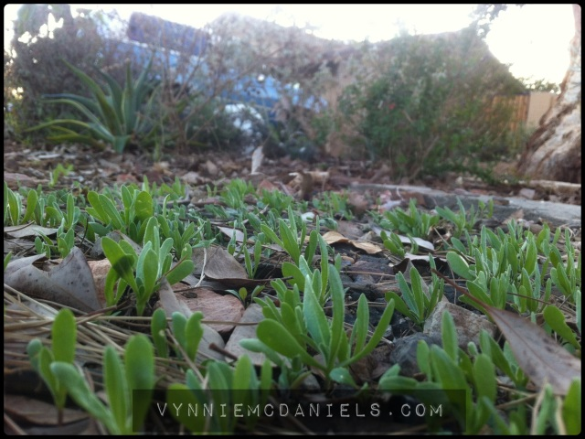 Wildflowers are on the way!
