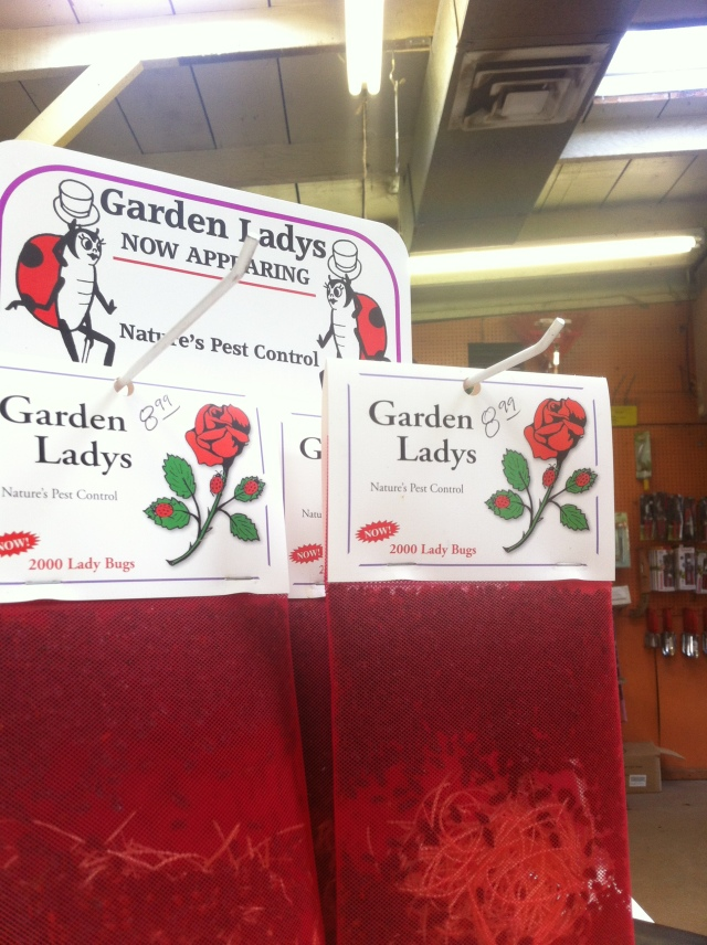 Buy Ladybugs!