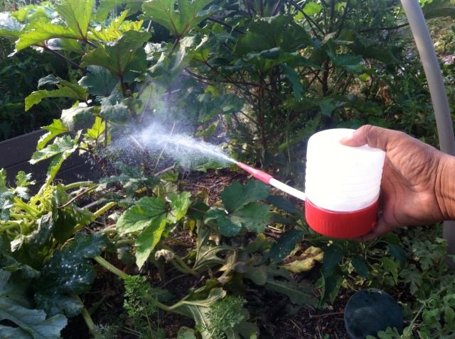 Pest management - DE puffer